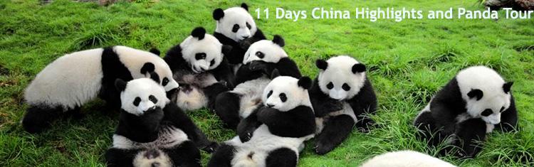 11 Days China Highlights and Panda Tour